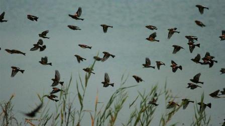 燕子每年冬天都会飞去哪里过冬?