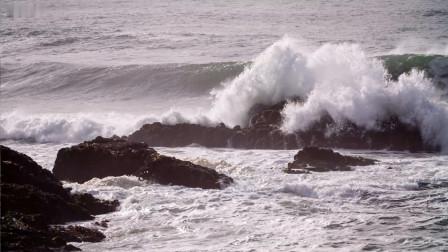 神奇的海獭, 到底有多厉害, 你别只想把它当表情包