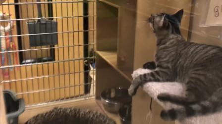 宠物店猫咪的幸福时光, 论一个损友的重要性!