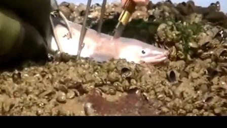 赶海: 外国小伙去海滩捡宝, 捡到的这些海鲜真令人羡慕