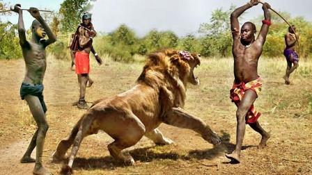 比战斗民族更彪悍的人, 就连最凶猛的狮子, 看见马赛人也认怂!