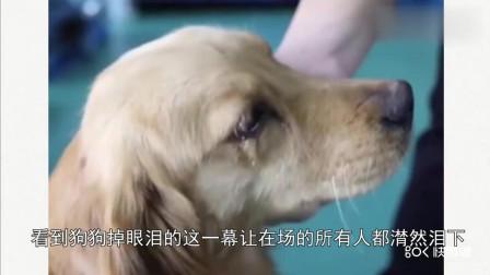 爱狗人士从狗肉市场救出金毛后, 金毛感动的流眼泪