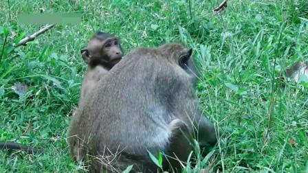 """实拍: 小猴子""""调皮""""地爬上照相机架, 太不老实了!"""