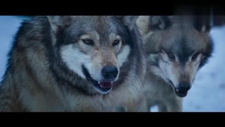 狼群盯住了, 印度硬汉, 一顿开挂, 全撂倒