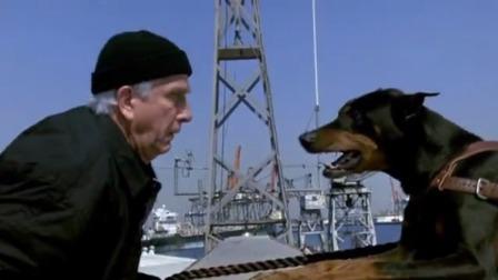 白头神探:一脸懵的狗狗,睡着了还被小偷叫醒,结果悲剧了