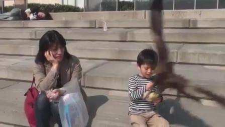 小男孩舍不得吃乌龟面包 遭乌鸦横刀夺食