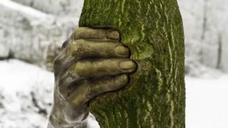 """世界最""""孤独""""的手, 抓着一棵树50年从未松手, 什么原因?"""