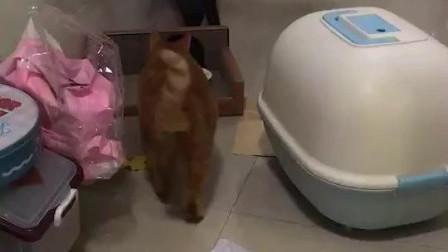 寄养的橘猫和自家黑猫叫唤, 这就是别人家的孩子和自己的孩子区别