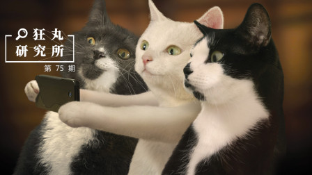 如何科学的爱猫? 这有6个铲屎官必须要看的冷知识 | 狂丸研究所