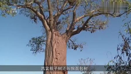 非洲生命树, 树内有2吨水够一家人喝半年, 曾经拯救过无数非洲人