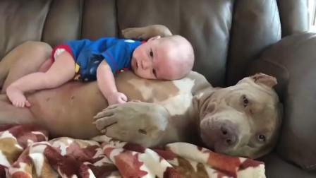 小宝宝把狗狗肚皮变成了婴儿床, 舒舒服服的趴在上面不肯下来了