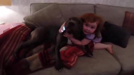爸爸假装骂小娃, 狗狗听到立马冲进屋保护宝宝, 这小模样太可爱了