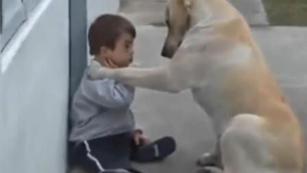 患自闭症宝宝心情不好, 狗狗在一旁一直陪伴安慰宝宝, 感动泪目了