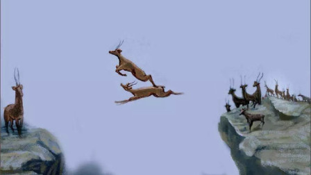 6只羚羊飞跃万丈悬崖, 第6只才是高手, 镜头拍下全过程