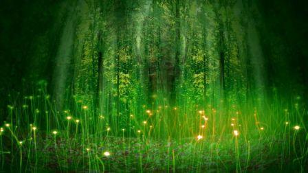 喜鹊喳喳喳小鸟森林丛林阳光少儿舞蹈