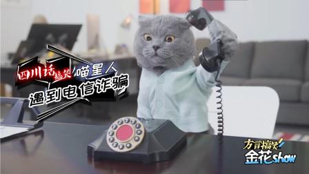搞笑四川话动物配音: 喵星人接到诈骗电话, 一顿忽悠把骗子气哭了!
