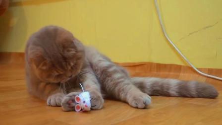 主人给喵星人带回两只小老鼠, 喵星人: 这老鼠咋不能吃? 快拿走