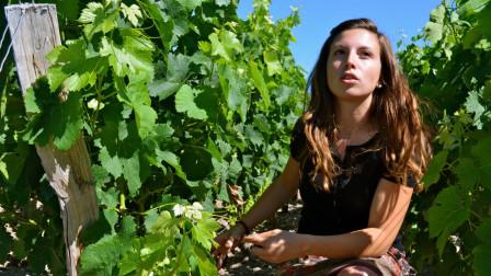 全球最牛葡萄酒产地, 11万公顷葡萄园, 每年产8.5亿葡萄酒!