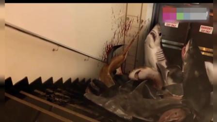 鲨卷风: 感觉来到陆地上的鲨鱼好没尊严啊, 这么血腥的画面也充满喜感