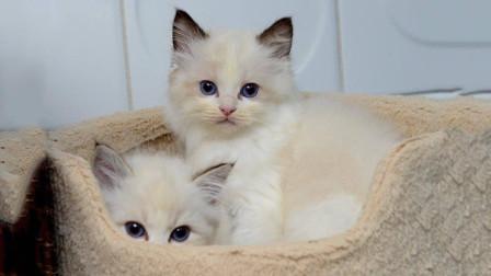 """猫妈妈坐在""""闪草""""中, 一脸宠溺看着小奶猫玩耍"""