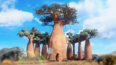 丝路传奇 大海图 生命之树:猴面包树