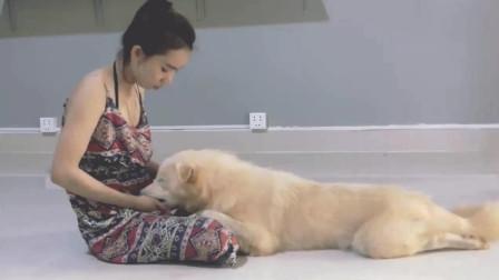 美女在家陪狗狗玩耍, 给狗狗顺毛抓虱子, 好有爱的一幕