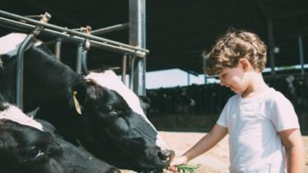 幼儿园大班手指韵律操高高山上一头牛 锻炼宝宝手指灵活