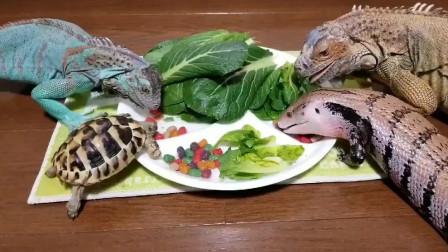 来吃晚饭啦, 你们觉得哪个最可爱
