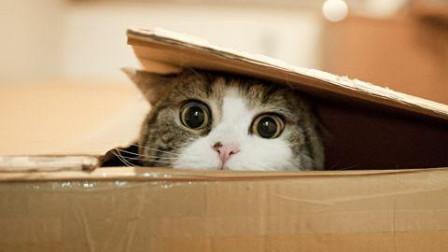 【每日一囧合辑】猫猫化身投球外挂, 养猫千日用猫一时