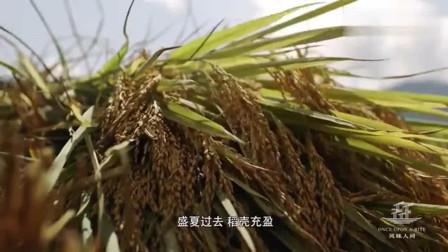 风味人间: 农民收获水稻, 晾晒之后是怎样变成大米的呢?