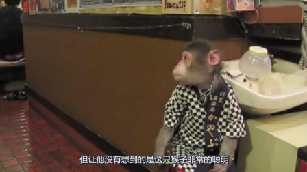日本最奇葩的餐厅, 小猴子当服务员, 每天给几根香蕉当工资!