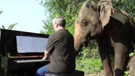 退休音乐家对象弹琴? 大象身体都好了!