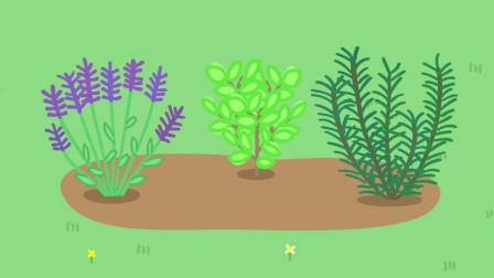 草地上种着三株植物, 分别是薰衣草、薄荷叶和迷迭香