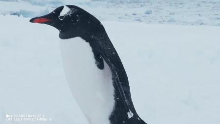 说走就走, 华为Mate20 X带你开眼看南极