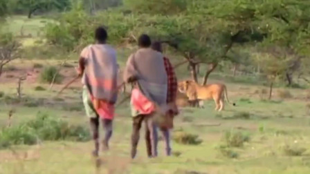 3人走向11头狮子抢夺食物, 网友: 现实版武松打虎!