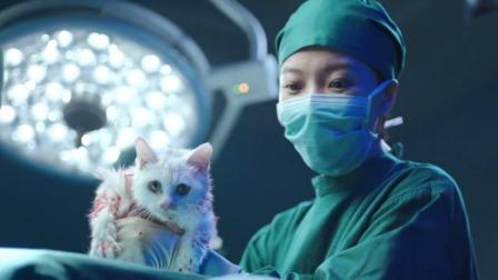 大叔肚子里有猫,动手术时白猫被取出,大叔:不对,应该是只黑猫