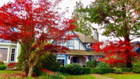 深秋的温哥华  红叶依然耀眼~加拿大旅游系列(19)