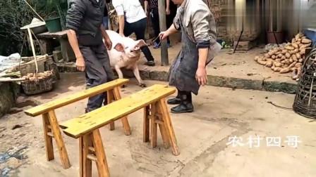别说农村人残忍, 农村人就是这样杀猪的, 网友: 还有这种操作!