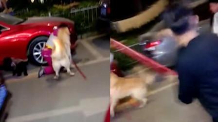 广东深圳: 恐怖! 家养大型犬当街疯狂撕咬女子 女子惊声尖叫身上多处被咬烂