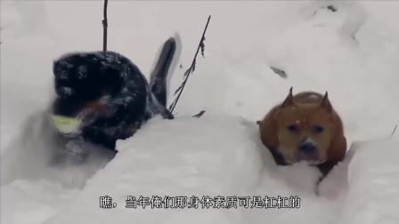 冰天雪地里, 两只狗狗一起犯二了! 真是理解不了它们开心的点啊