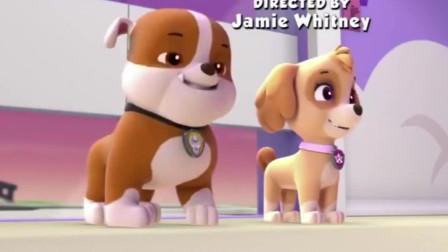汪汪队立大功莱德和狗狗们给阿奇的惊喜生日派对