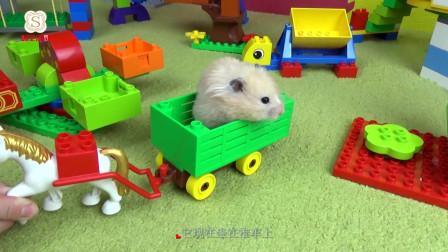 仓鼠的专属玩具间, 数不胜数的玩具和食物, 真羡慕!