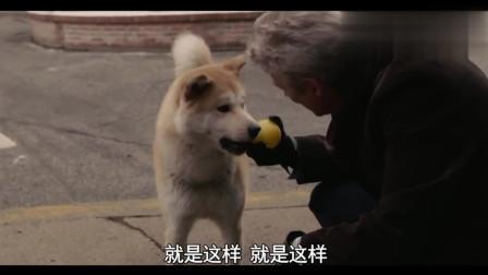 《忠犬八公》催泪片段, 八公学会接球的那一天, 就失去了它的帕克