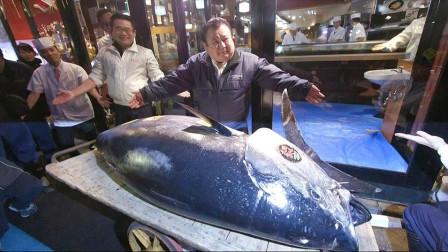 芒果撞地球 寿司店老板购买278公斤金枪鱼