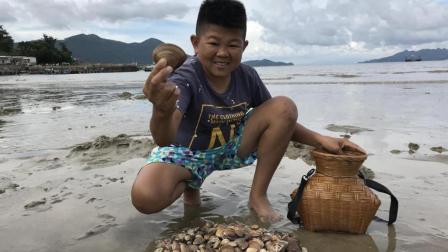海贝肥美个大, 小六村长在海滩上随手便可以收获一篓, 晚餐有了