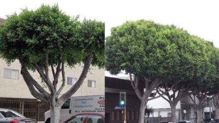 【一席·演讲·658】詹凤春:树木医