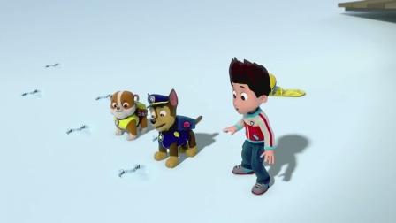 汪汪队立大功:莱德和狗狗们查看脚印,脚印的主人一定很重!