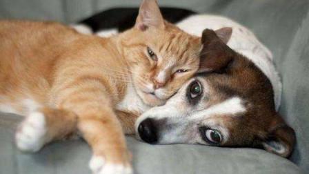 狗狗追求猫咪不成, 竟一爪子把它拍下了楼梯! 真是个大猪蹄子!
