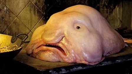 """世界上最丑的鱼: 长着""""香肠嘴"""", 天生""""哭丧脸"""", 吃货都嫌弃!"""