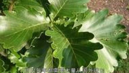 农村一种常见植物,农民遇到就砍掉,却不知卖到日本是抢手货!